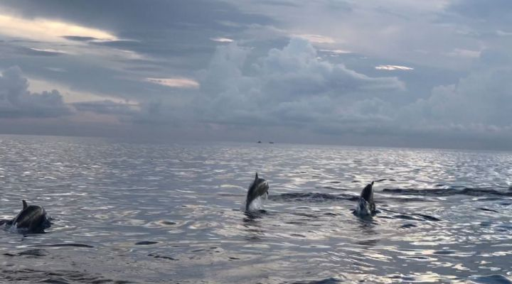 Bali Trip Host Tour - Dolphin Watching